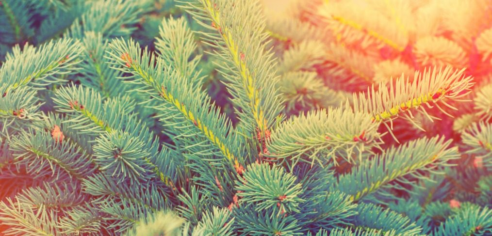 How To Pick Out The Perfect Christmas Tree