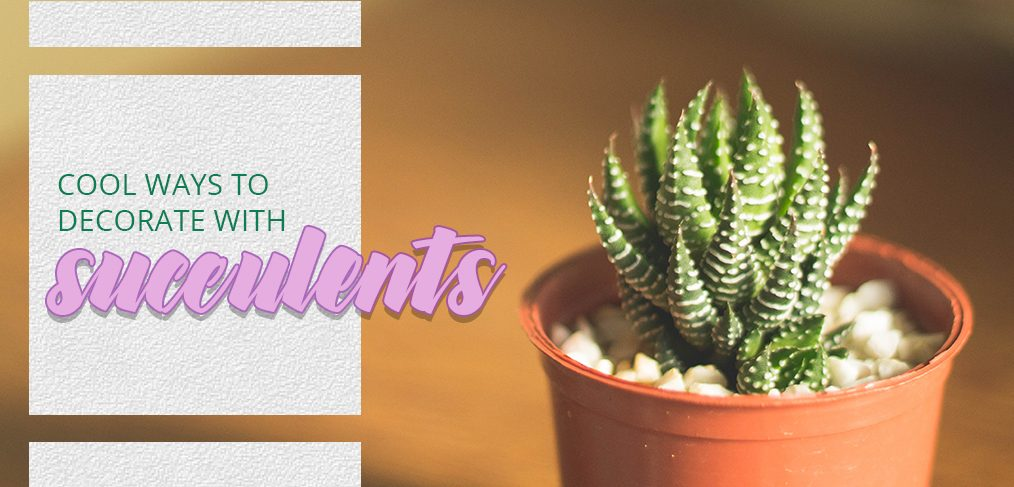 Cool Ways To Decorate With Succulents