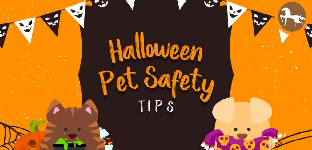 keep pets safe on Halloween